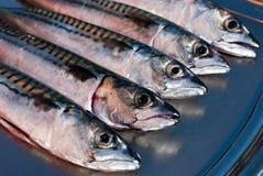 Makreel stock afbeelding