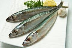 Makreel royalty-vrije stock afbeelding