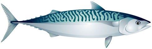Makreel, oceaanvissen stock illustratie