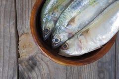 Makreel verse vissen Royalty-vrije Stock Fotografie