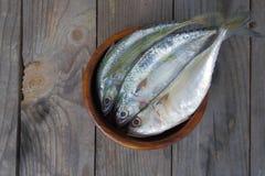 Makreel verse vissen Royalty-vrije Stock Afbeelding