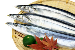 Makreelgeep stock foto's