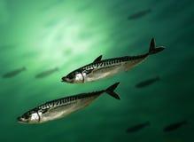 Makreelvissen stock afbeeldingen