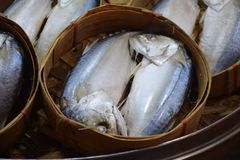 Makreelvissen in ronde bamboemand stock foto