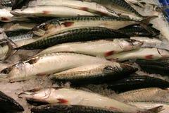 makrela obraz stock