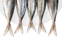 makrela ogony półkowi surowi obrazy stock