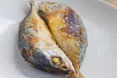 Makrela smażąca Zdjęcia Stock