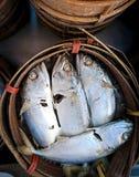 Makrela w koszu Obraz Stock