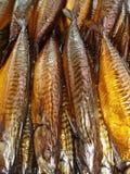 Makrele Stockbilder