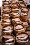 Makrele Lizenzfreies Stockbild