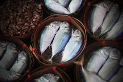Makrele auf thailändischen Märkten stockbild