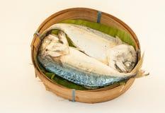 Makrele auf weißem Hintergrund Stockbild