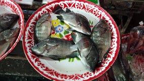 Makrele, die noch in der lebendigen für Abendessennahaufnahme verkauft zu werden Aufwartung der Platte, liegt stock video footage
