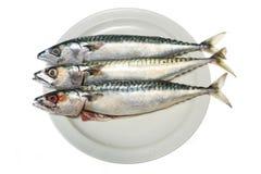 Makrele drei Stockfoto
