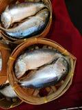 Makrele in einem Korb lizenzfreies stockfoto