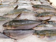 Makrele für Verkauf Lizenzfreie Stockbilder