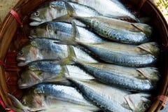 Makrele im Korb Lizenzfreie Stockbilder