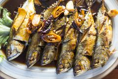 Makrele mit Soße des indischen Sesams drei Siamesische Nahrung - Stirfischrogen #6 Lizenzfreies Stockfoto