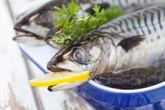 Makrelen-Fische Stockbild
