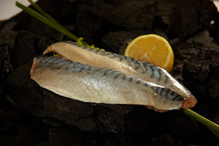 Makrelen-Leisten Lizenzfreies Stockbild