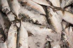 Makrelen von einem Markt in Thailand Lizenzfreies Stockfoto