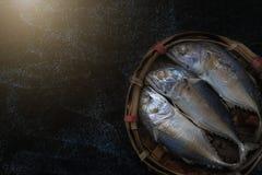 Makrelenfische auf schwarzem Hintergrund Stockbild