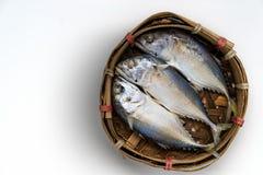 Makrelenfische auf weißem Hintergrund Stockfoto