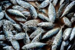 Makrelenfische mit Salz Stockfoto