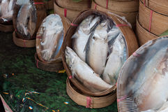 Makrelenkorb lizenzfreie stockfotos
