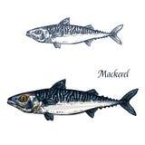 Makreli nakreślenia rybi wektor odizolowywająca ikona ilustracja wektor