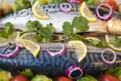 Makreli ryba Zdjęcie Royalty Free
