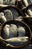 Makrill i runda bambukorgar Royaltyfri Fotografi