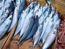 Makrillar på fiskmarknaden Royaltyfria Foton