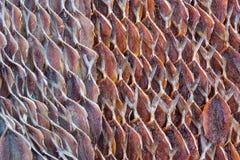 Makrillen fisk torkade från solljus, mat i Thailand Arkivfoto