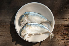 Makrillfishs Royaltyfria Foton