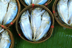 Makrillfisk i bambukorg på marknaden Royaltyfri Fotografi