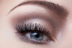 Makroöga med modeljussmink, långa ögonfrans, ögonbryn royaltyfri foto