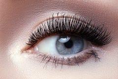 Makroöga med modeljussmink, långa ögonfrans, ögonbryn royaltyfri bild