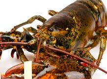 Makro- żywy homar obraz stock
