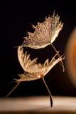 Makro, abstrakte Zusammensetzung mit buntem Wasser fällt auf Löwenzahnsamen Lizenzfreies Stockbild
