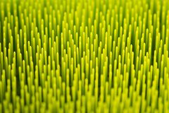 Makro abstrakter grüner Hintergrund Stockfotos