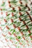 Makro abstraktes Muster von weißen Dornen des humicocalcium Mischungskaktus Selektiver Fokus Lizenzfreie Stockfotografie
