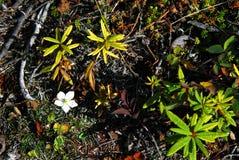 Makro Alaska Wrangell för nationell park- av den härliga tundran arkivfoton