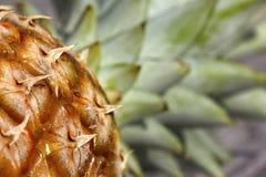makro- ananas Obrazy Stock