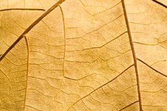 Makro auf strukturiertem Herbstbraunblatt Stockfotografie