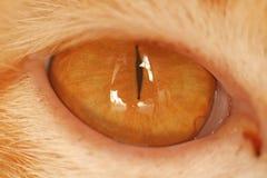 Makro av Cat Eye Fotografering för Bildbyråer