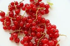 Makro av den röda vinbäret royaltyfri fotografi