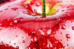 Makro av det nya röda våta äpplet royaltyfri foto