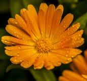 Makro av en blomma Royaltyfria Foton