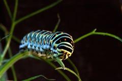 Makro av en caterpillar Royaltyfria Bilder